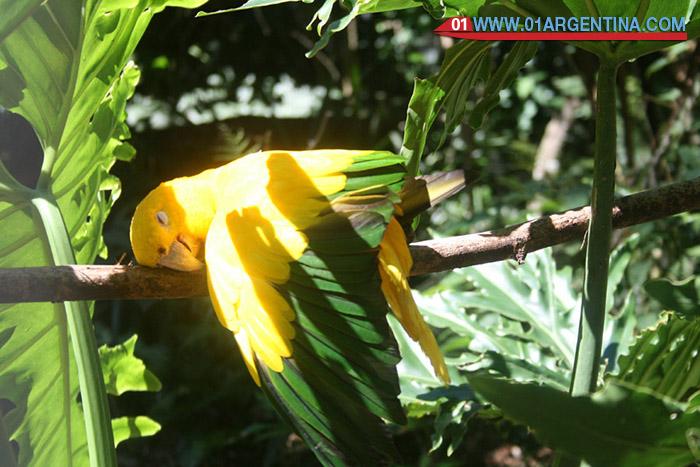 birds-iguazu01